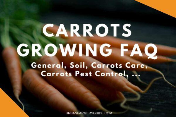 Carrots Growing FAQ_ General, Soil, Carrots Care, Carrots Pest Control
