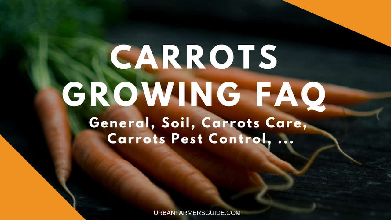 Carrots Growing FAQ_ General, Soil, Carrots Care, Carrots Pest Control