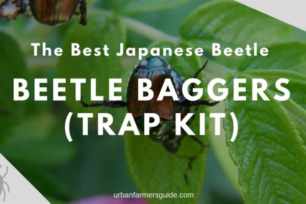 The Best Japanese Beetle Baggers (Trap Kit)